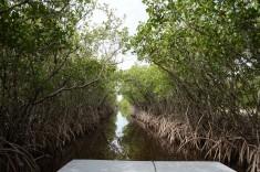 Svävare (båt med fläkt) genom Everglades i Florida