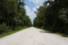 Grusväg i Florida USA