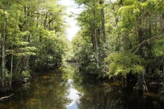 Flod genom träsk i Florida USA